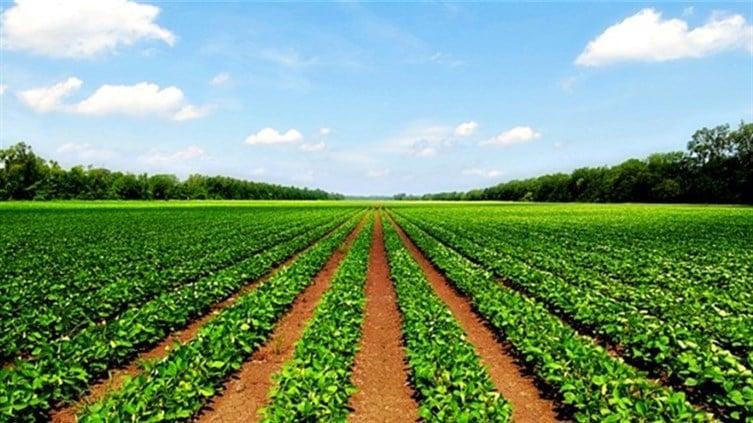 Photos and videos photos detail - Profitable crops small plots ...